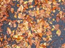 Autumn Leaves On Sidewalk colorido fotos de stock royalty free