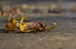 Autumn leaves on a sidewalk bokeh background Royalty Free Stock Photography