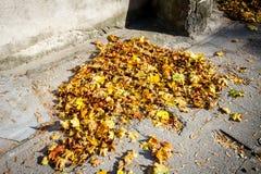 Autumn leaves on sidewalk Stock Photography
