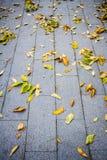 Autumn leaves on sidewalk Royalty Free Stock Image