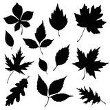 Autumn leaves silhouette set. Autumn leaves vector silhouette set Royalty Free Stock Images