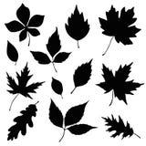 Autumn leaves silhouette set. Autumn leaves vector silhouette set royalty free illustration