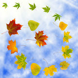 Autumn leaves in the sky Stock Photo