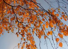 Autumn leaves and sky Stock Photography