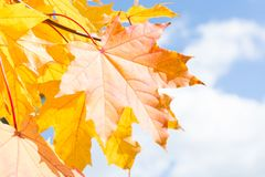 Autumn leaves in sky as background. Stock Photo
