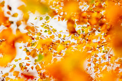 Autumn leaves on the sky Royalty Free Stock Photos