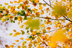 Autumn leaves on the sky Stock Photography