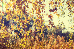Autumn leaves sky background. Royalty Free Stock Image