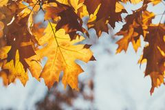 Autumn leaves sky background, details Royalty Free Stock Photos