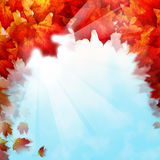 Autumn Leaves on Sky Background Royalty Free Stock Photo