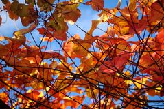Autumn leaves sky background Royalty Free Stock Photography