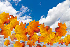Autumn leaves in sky. Flying autumn leaves in the sky Royalty Free Stock Images