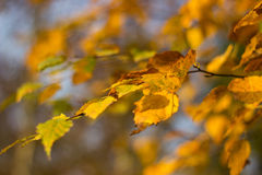 Autumn leaves on the sky in the park Royalty Free Stock Image
