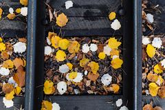 Autumn leaves on sleepers for train stock photo