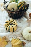Autumn leaves and small decorative pumpkins on warm cozy knit sw stock photography