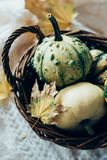 Autumn leaves and small decorative pumpkins on warm cozy knit sw royalty free stock photo
