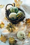 Autumn leaves and small decorative pumpkins on warm cozy knit sw stock photos