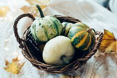 Autumn leaves and small decorative pumpkins on warm cozy knit sw stock photo