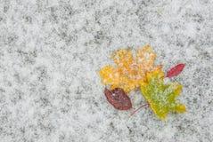 Autumn leaves on snow Royalty Free Stock Photos