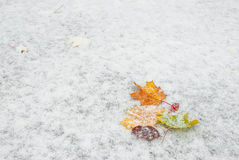 Autumn leaves on snow Stock Photos