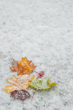 Autumn leaves on snow Stock Photography