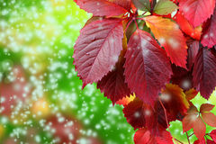 Autumn leaves and snowflakes Royalty Free Stock Photography