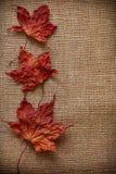 Autumn Leaves sobre fondo del yute Foto de archivo