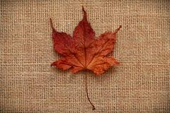 Autumn Leaves sobre fondo del yute fotografía de archivo libre de regalías