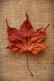 Autumn Leaves sobre fondo del yute Imágenes de archivo libres de regalías