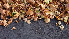 Autumn Leaves sobre un fondo gris oscuro imágenes de archivo libres de regalías