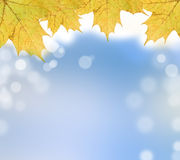Autumn leaves on soft background. Color autumn leaves on soft and magical background Royalty Free Stock Photos