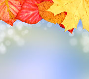 Autumn leaves on soft background. Color autumn leaves on soft and magical background Royalty Free Stock Images