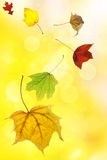 Autumn leaves on soft yellow background Royalty Free Stock Photography