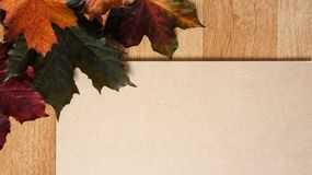Autumn Leaves som är ordnad i ett hörn mot en träbakgrund arkivbilder