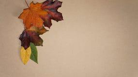 Autumn Leaves som är ordnad i ett hörn mot en träbakgrund arkivfoto