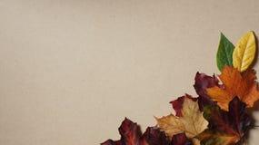 Autumn Leaves som är ordnad i ett hörn mot en träbakgrund arkivfoton