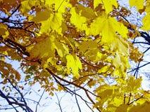 Autumn Leaves som faller försiktigt Arkivbild