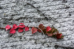 Autumn leaves. Some Autumn leaves in nature Stock Photos