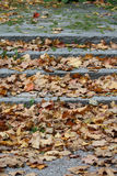 Autumn leaves. Some autumn leaves on stairs in a park area Royalty Free Stock Photos