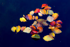 Autumn leaves. Some autumn leaves on the water Stock Photos