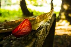 Autumn Leaves sopra legno scuro Fotografia Stock Libera da Diritti