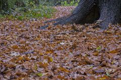 Autumn leaves on Southampton Common royalty free stock photography