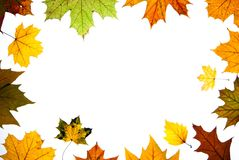 Autumn leaves space for text centered Royalty Free Stock Images