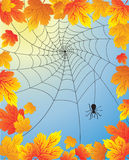 Autumn leaves with spider web Stock Image