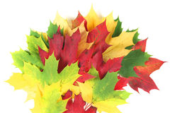 Autumn leaves splay with white space. Autumn coloured leaves splay with white space royalty free stock image