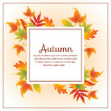 Autumn leaves square Royalty Free Stock Images