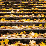 Autumn leaves on stair Royalty Free Stock Photo