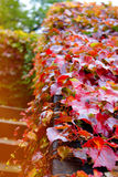 Autumn leaves. On the stairs Stock Images
