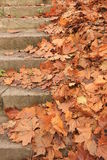 Autumn leaves on stairs Royalty Free Stock Photos