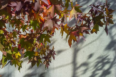 Autumn leaves. Standing against a white background Royalty Free Stock Photo
